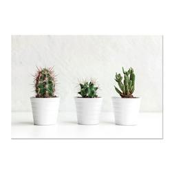 Nadruk na płótnie Cactus 60x40 cm wzór 1